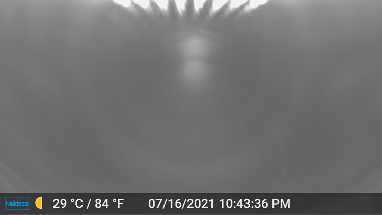 Night image from the Meidase trail camera with the camera up tight against the window.