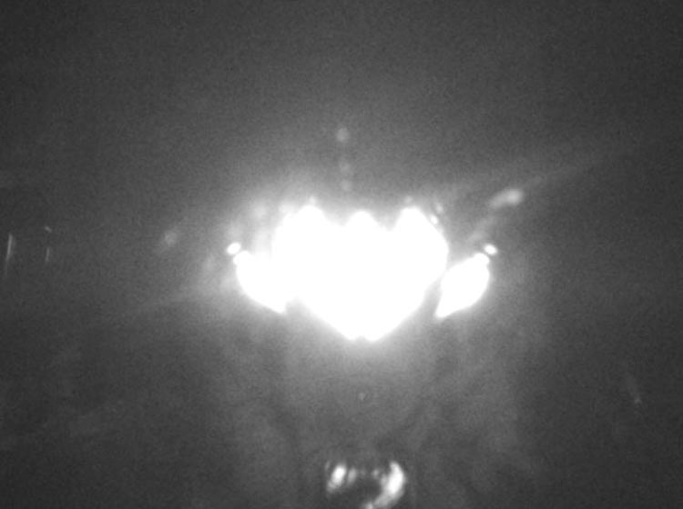 Flash reflection from window captured by Stealth Cam trail camera.